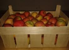Donacija jabuka Centra Stančić