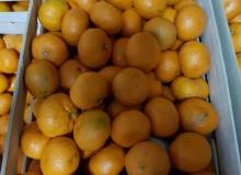 Donacija mandarina